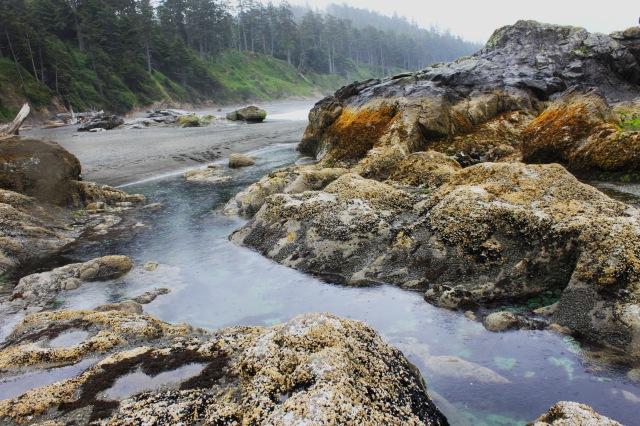 tide pools 3