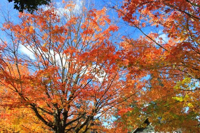 Fall (11) PS