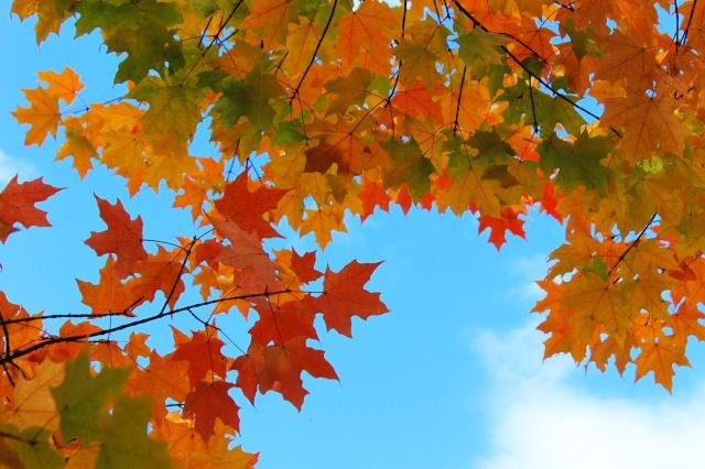 Fall (12) PS