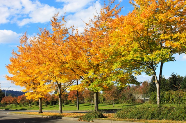 Fall (14) PS