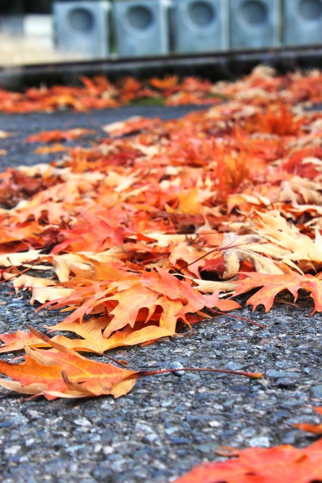 Fall (9) PS
