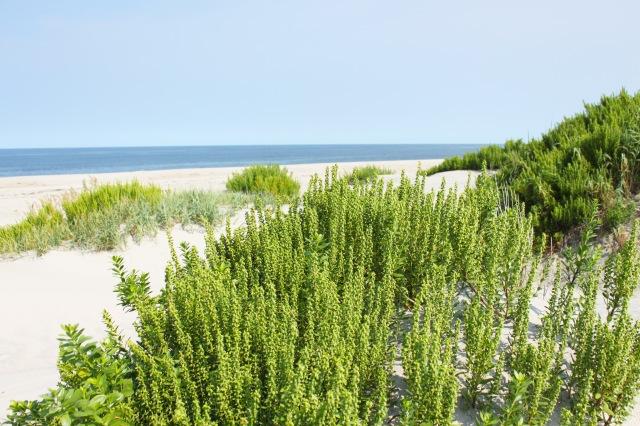 North Carolina Outer Banks (25)