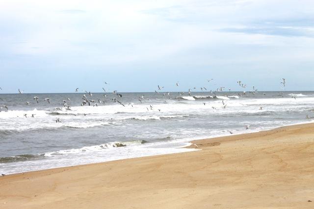 North Carolina Outer Banks (8)