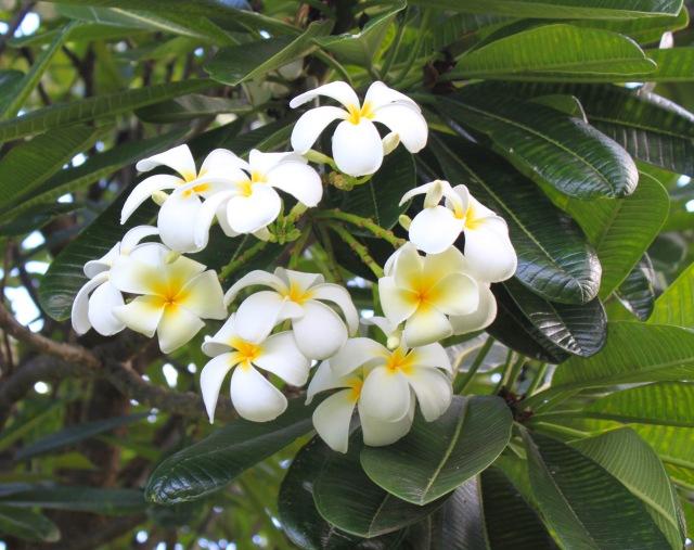 Kauai, Hawaii (2)