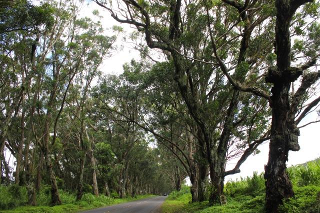 Kauai, Hawaii (23)