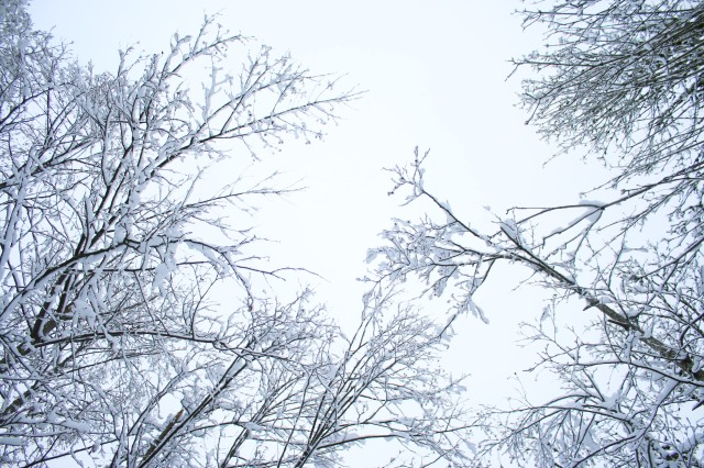 snow-day-4