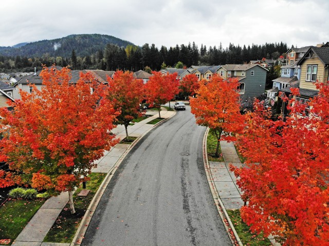 Snoqualmie Autumn 5